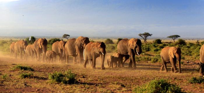Aufregende Safari & Traumstrand
