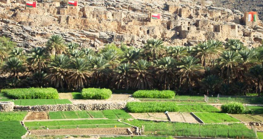 Oman_Oase_web