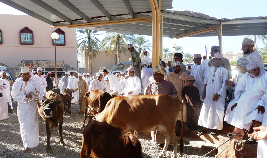 Tiermarkt in Nizwa_web